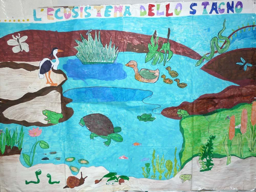 I cartelloni della 3d marzabotto sesto san for Ecosistema dello stagno