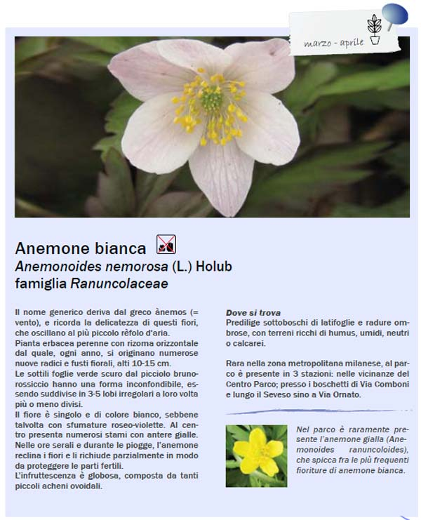 scheda-anemone.jpg